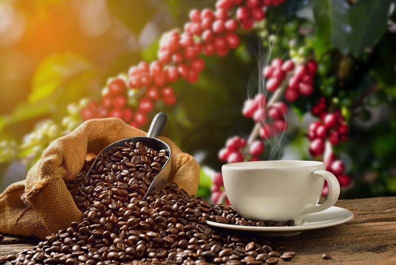 El grano de café, los tipos más populares y más exportados